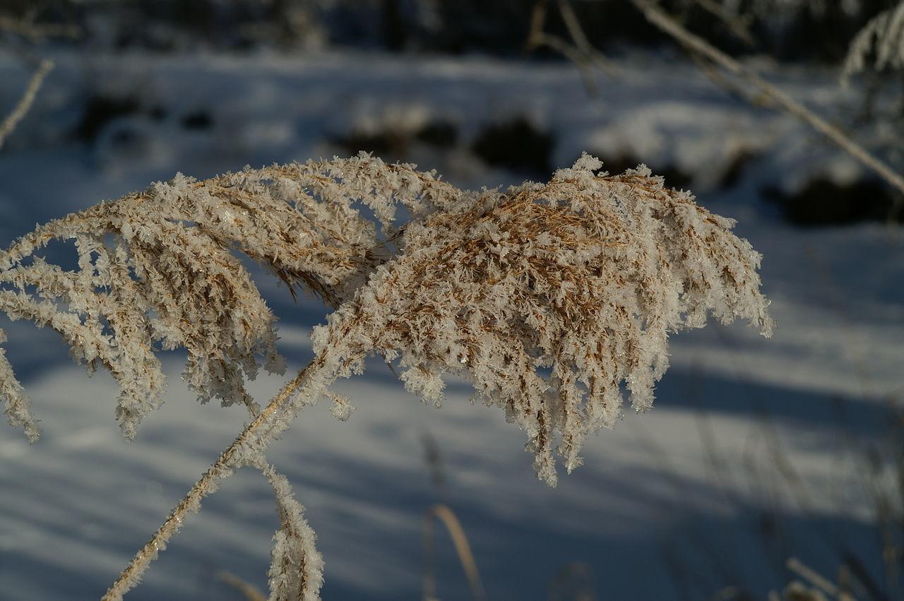 Schweiz Wallis Leuk Schilf Reed Winter Wintertime Winter Wonderland Eis Kalt Cold Winterwonderland Ice Cold Days Landscape