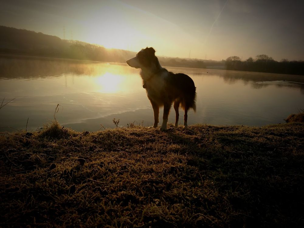 EyeEm Selects Dog Pets One Animal Domestic Animals Animal Animal Themes Outdoors Sunset Mammal Day Nature No People Water Sky Grass