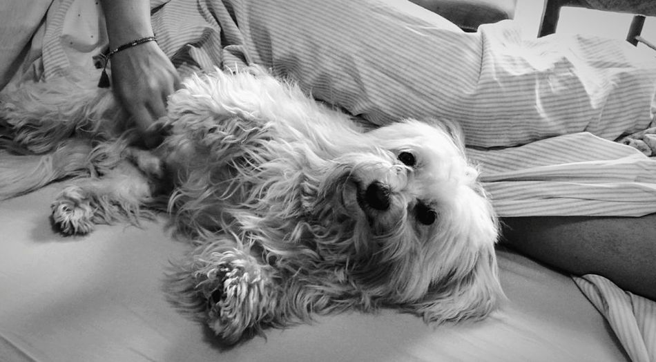 Massage.. Dogs Domestic Animals Pets One Animal Friendship Close-up Dog Animal Mobilephotography The Secret Spaces Resist Enjoying Life Mobile Photography Light And Shadow Dogoftheday Dog❤ Dogs Of EyeEm Dog Love