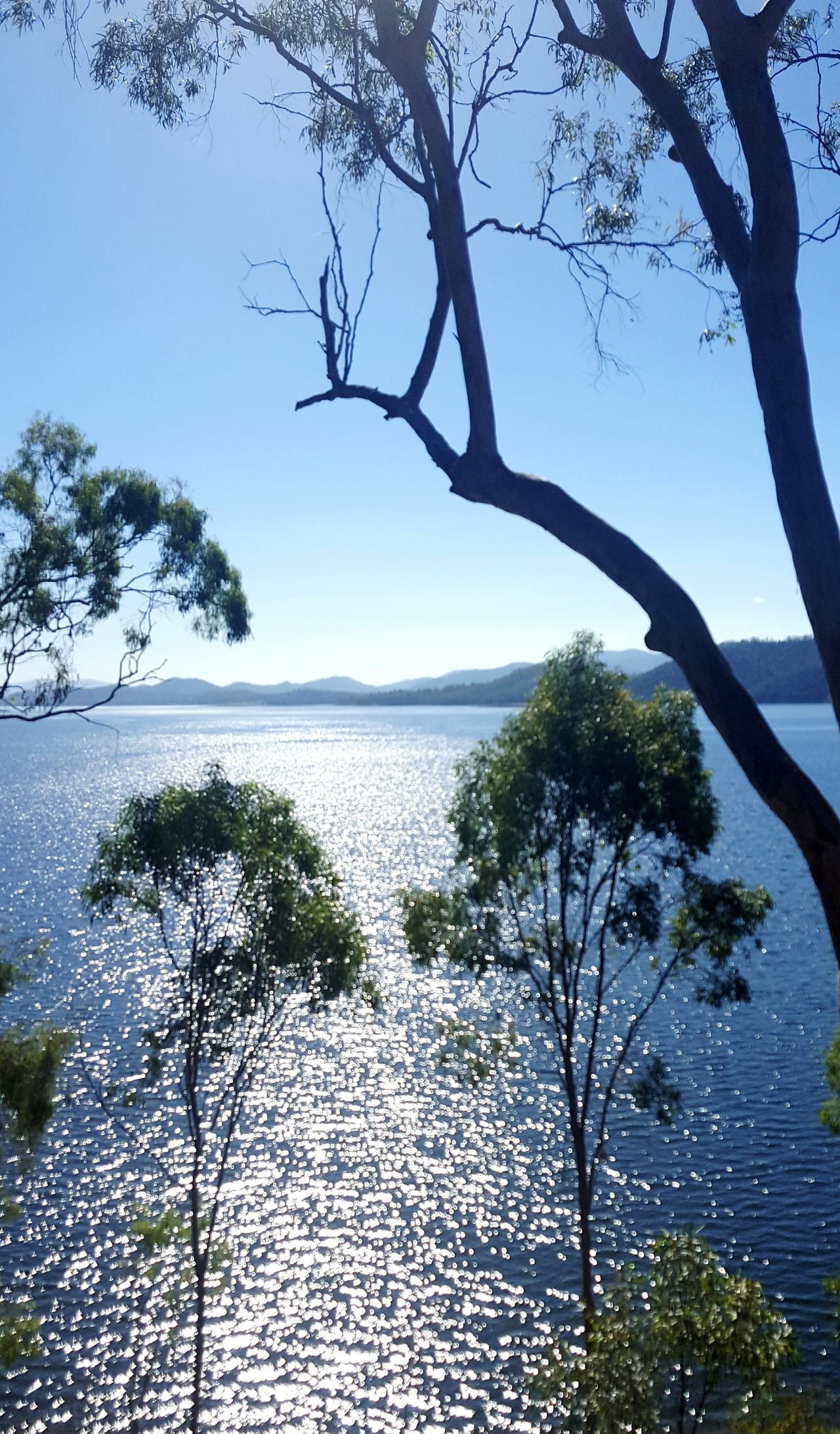 Australian bush dam Australian Bush Australian dam Day Beauty In Nature Horizon Over Water