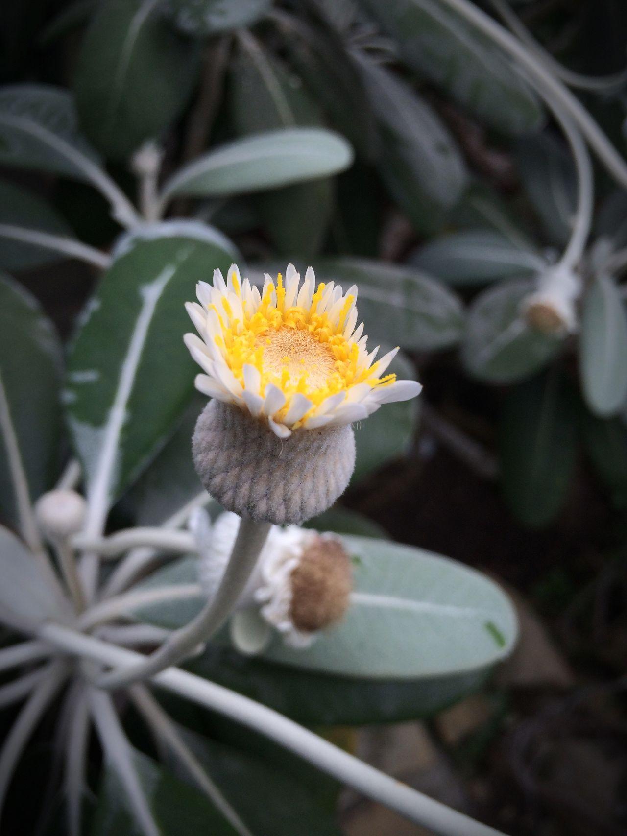 Flower Blossom Plant Nature Blooming Flower