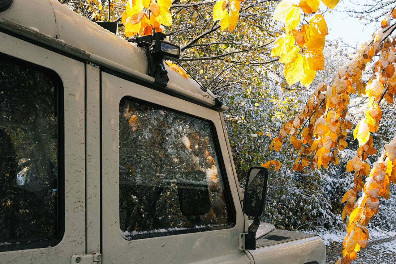 Snowy Backroads Autumn Backroads Bolu..TURKEY Branches Fall Leaves Land Vehicle Leaf Leaves Mode Of Transport Mountains Nature Outdoors Reflection In The Window Reflections Roads Transportation Tree Treescape Window Winter Winter Wonderland Wintertime