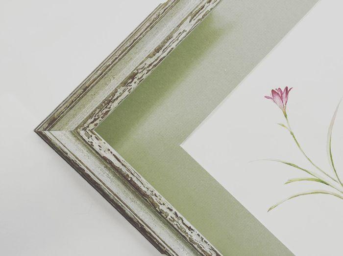 Соня Белле иллюстрация Illustration Botanical Botanical Images Art ArtWork Sonjabelle Decor Interior Design