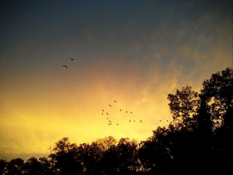 Flying Bird Animals In The Wild Flock Of Birds Tree Sunset Animal Wildlife Large Group Of Animals Outdoors Beauty In Nature Low Angle View No People At The Lake Pretty♡ Check This Out Picturejunkie Multi Colored No Filter