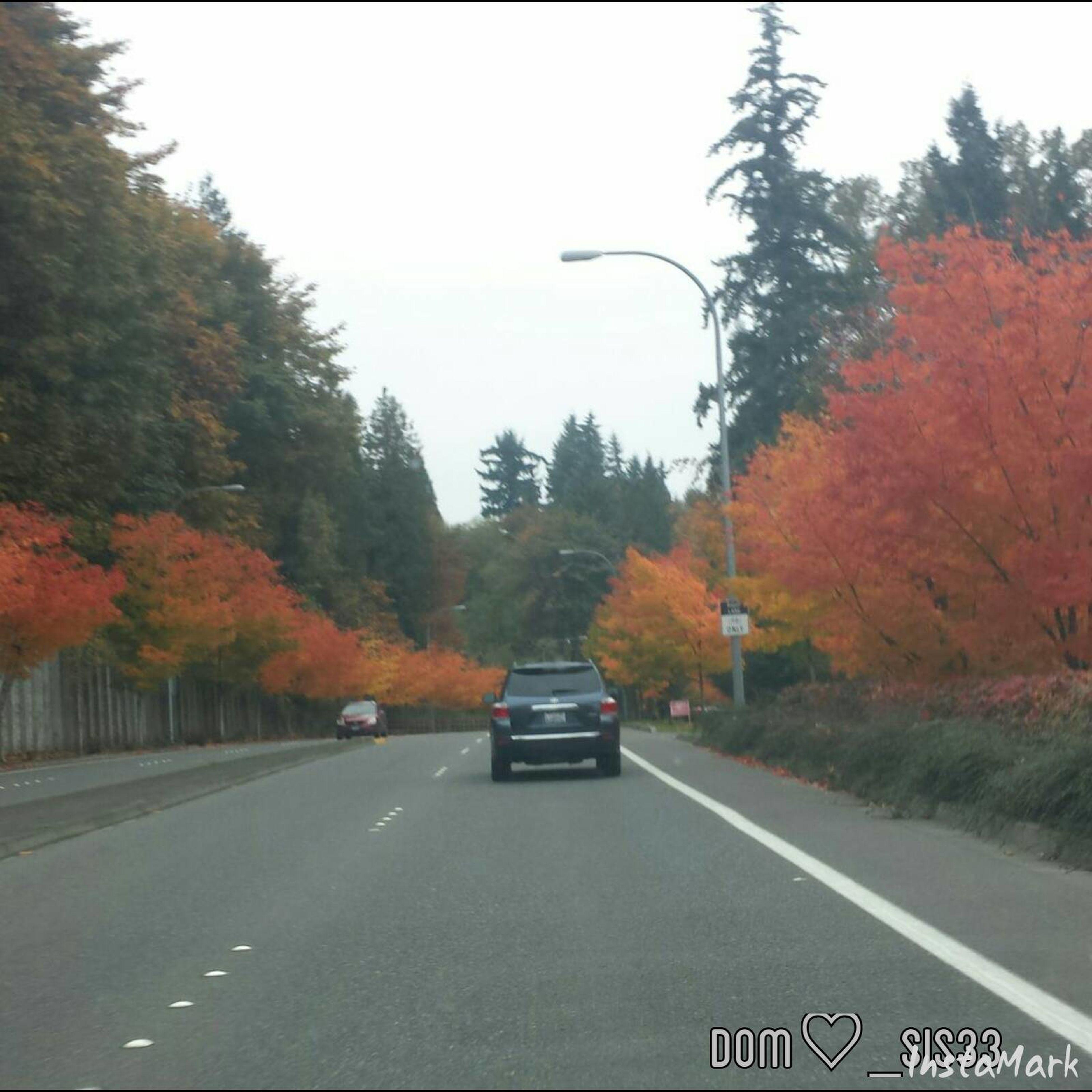 Fall2014 Beautiful Colorful Samamish