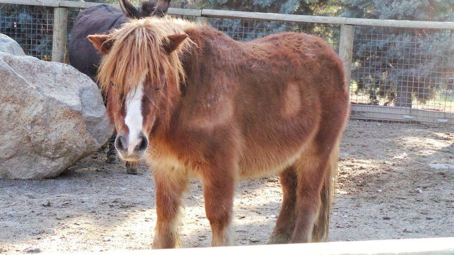 Animal Themes Horse Sunlight One Animal Brown Day No People Sasalı Doğal Yaşam Parkı🐎🌳🙇