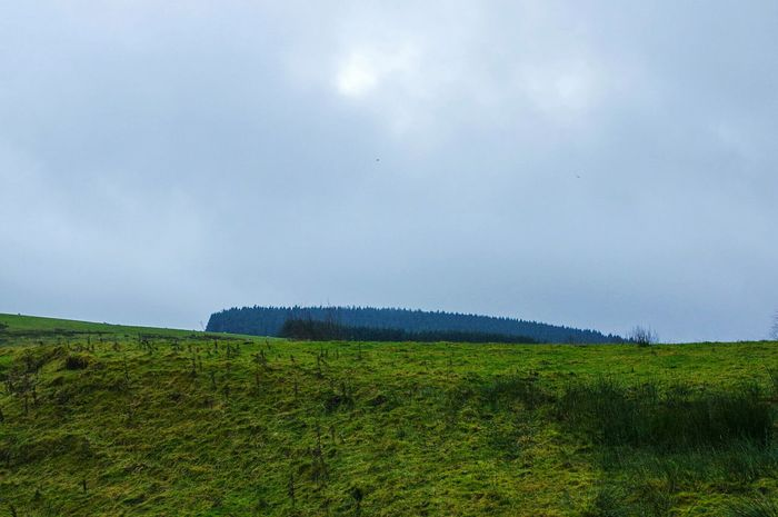 Landscape Nature Blue Social Issues Rain Sky Scenics Green Color Tranquil Scene Tranquility Cloud - Sky Rural Scene Plant Beauty In Nature No People Tree Agriculture Outdoors Day Lush - Description Fir Trees Xmas Trees Landscapes My Year My View Pendle Hill