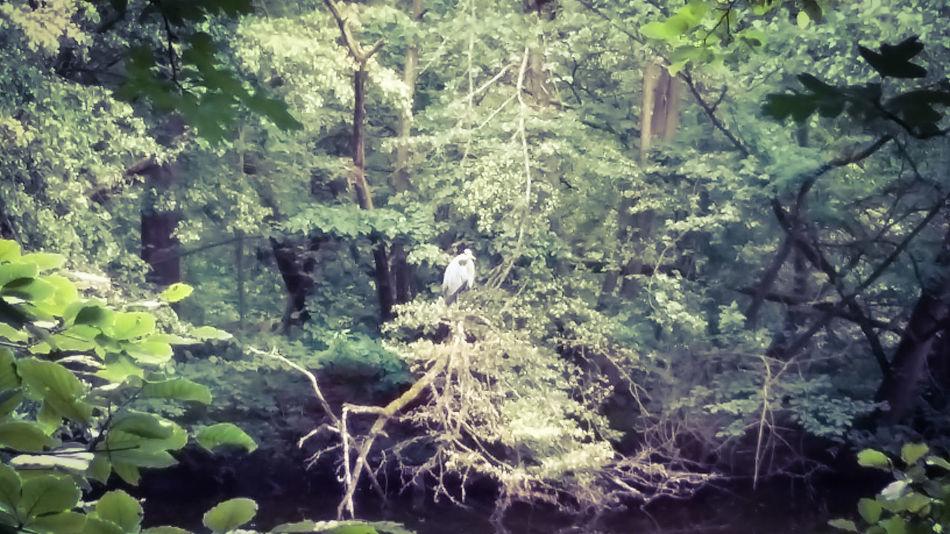 Vogel Jakobiweiher Frankfurter Stadtwald Waldspaziergang Nurianer Naturpur Frankfurt Am Main Pflanzenwelt Naturelovers Sommer Fischreiher