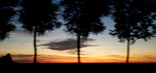Photo Taken While In Motion Photography In Motion Photo While Driving Trees In Line Early Morning Sunrise Natural Colors Beautiful Sky