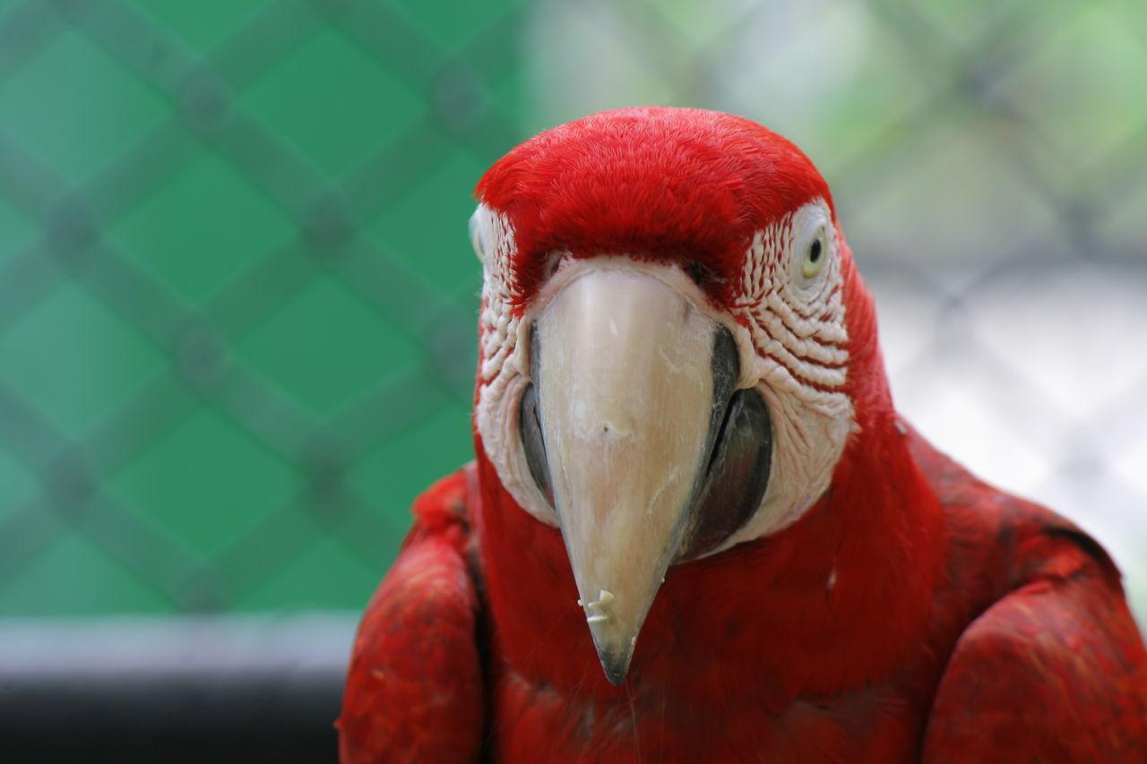 Bird Portrait Bird Posing Bird Photography Birds🐦⛅ Emperorvalleyzoo Check This Out Birds Of EyeEm  Zoo Photography