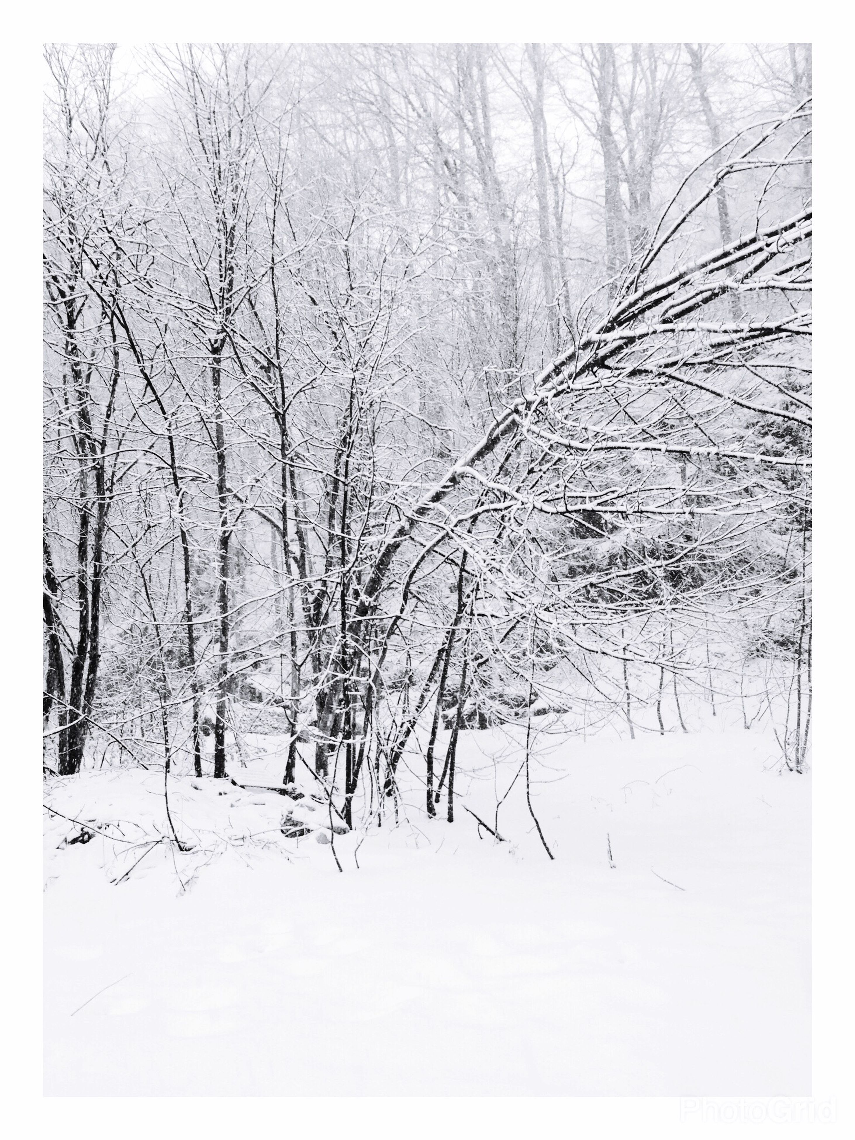 no people, nature, tree, outdoors, day, growth, close-up, snowing, sky
