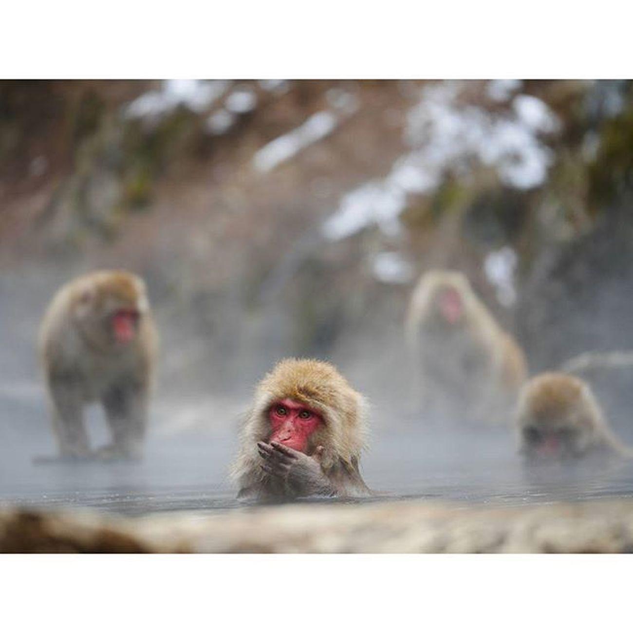 Jigokundani Monkey Park Liveauthentic Travelphotography Peoplescreative Wildlifephotography Japan TravelJapan Jigokudanimonkeypark