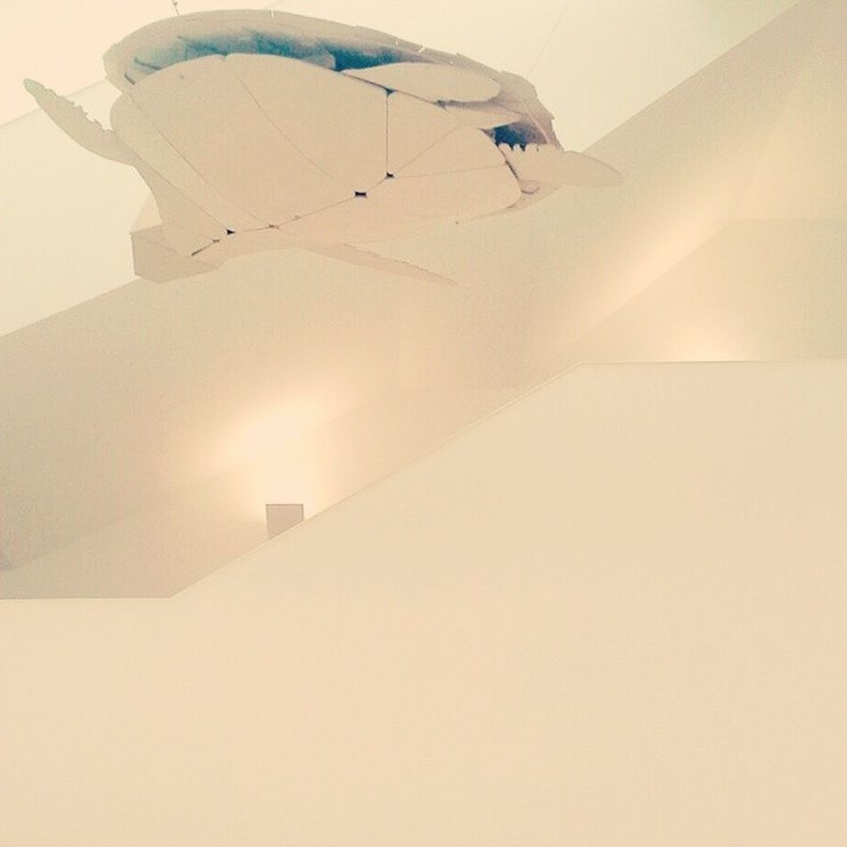 ganha asas e voa Tartagura Voar Fly Minimalista Minimalismo Ig_minimalism Oceanário Lisboa Lisbon Lisbonforever