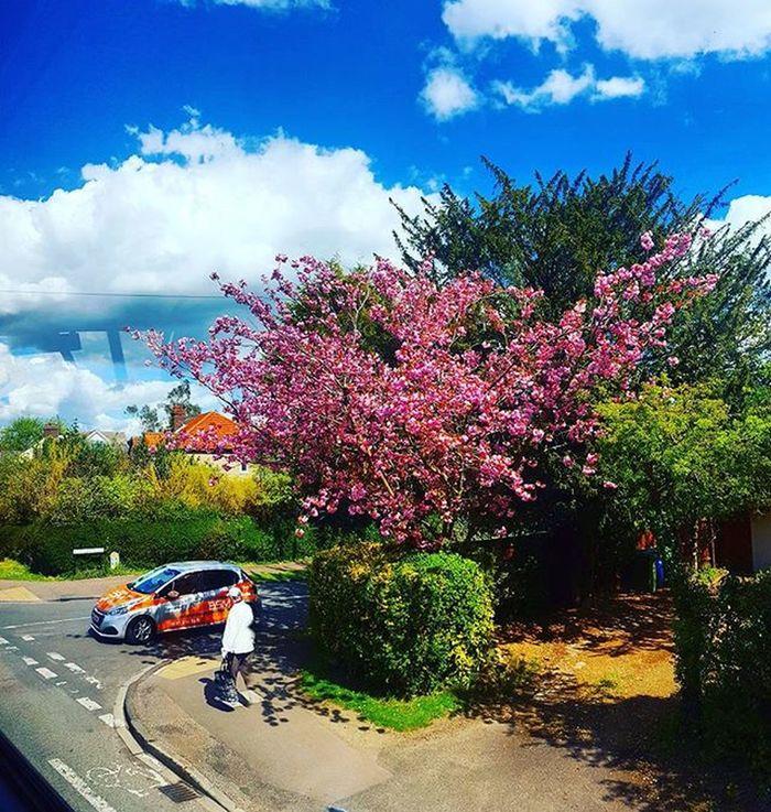 Wiosna.. 😍Polishgirl Photography Smatrphonephotography Photooftheday May Spring Wiosna Nature Pink Tree 😍