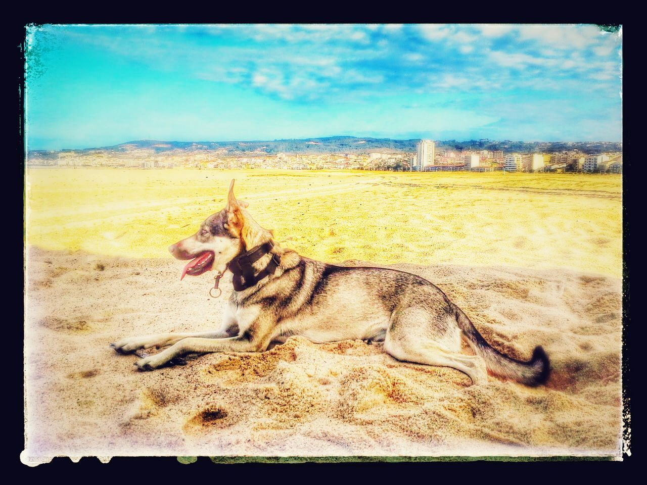 Sand Beach Animal Themes One Animal Domestic Animals Mammal Day Relaxation Sky Outdoors Lying Down Pets Dog No People Nature Sea Water Nature Beachtime Scenics Beauty Cloud - Sky Blue The Street Photographer - 2017 EyeEm Awards Tranquility