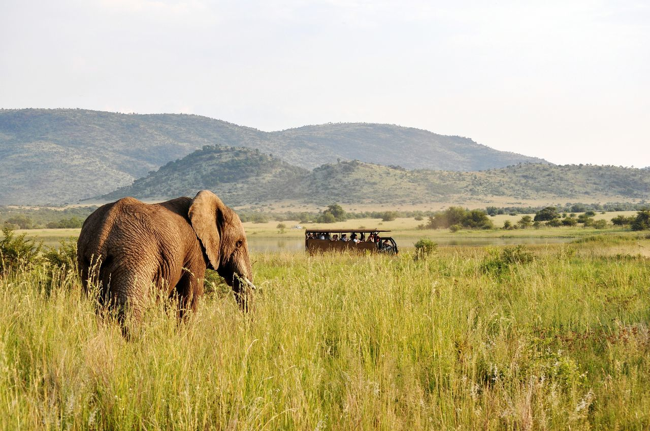 Beautiful stock photos of elefant, Animal Themes, Animal Wildlife, Animals In The Wild, Beauty In Nature