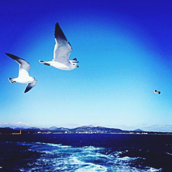 Sea And Sky Seagulls On The Ship Meer
