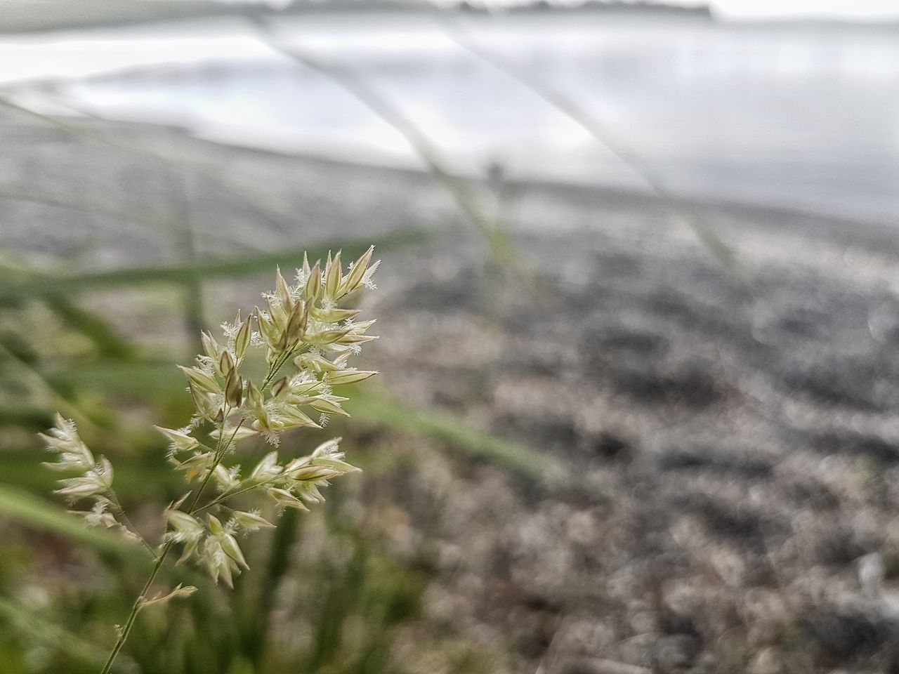 Nature Growth Close-up Outdoors Beauty In Nature Plant No People Day Cold Temperature Plants And Flowers Green Lake Peace And Quiet Life High Angle View Focus Simplicity Fragility Flower Head Freshness Leaf Water Meditation Common EyeEm Nature Lover