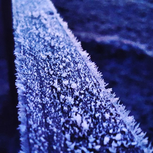 Frosty Frosty Mornings Frost On A Fence Post