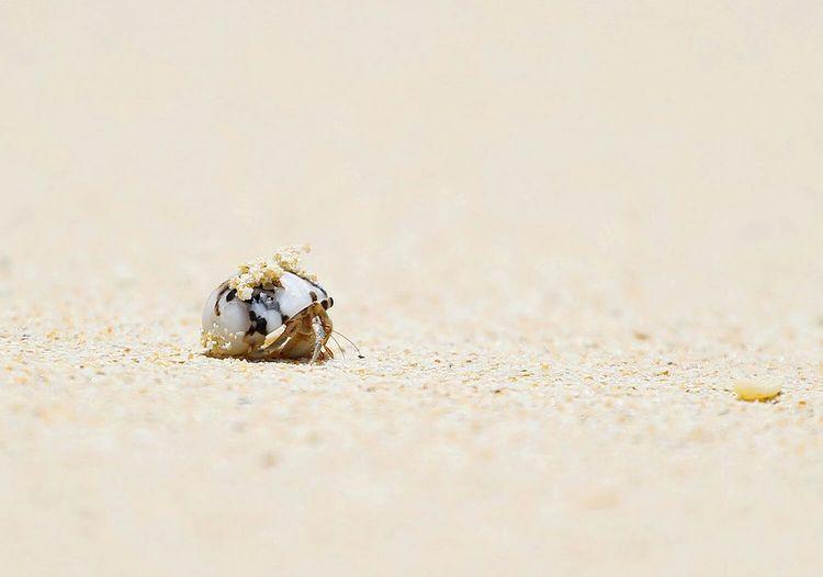 Little Sea Pakmengbeach Trang Andaman Sea Shell