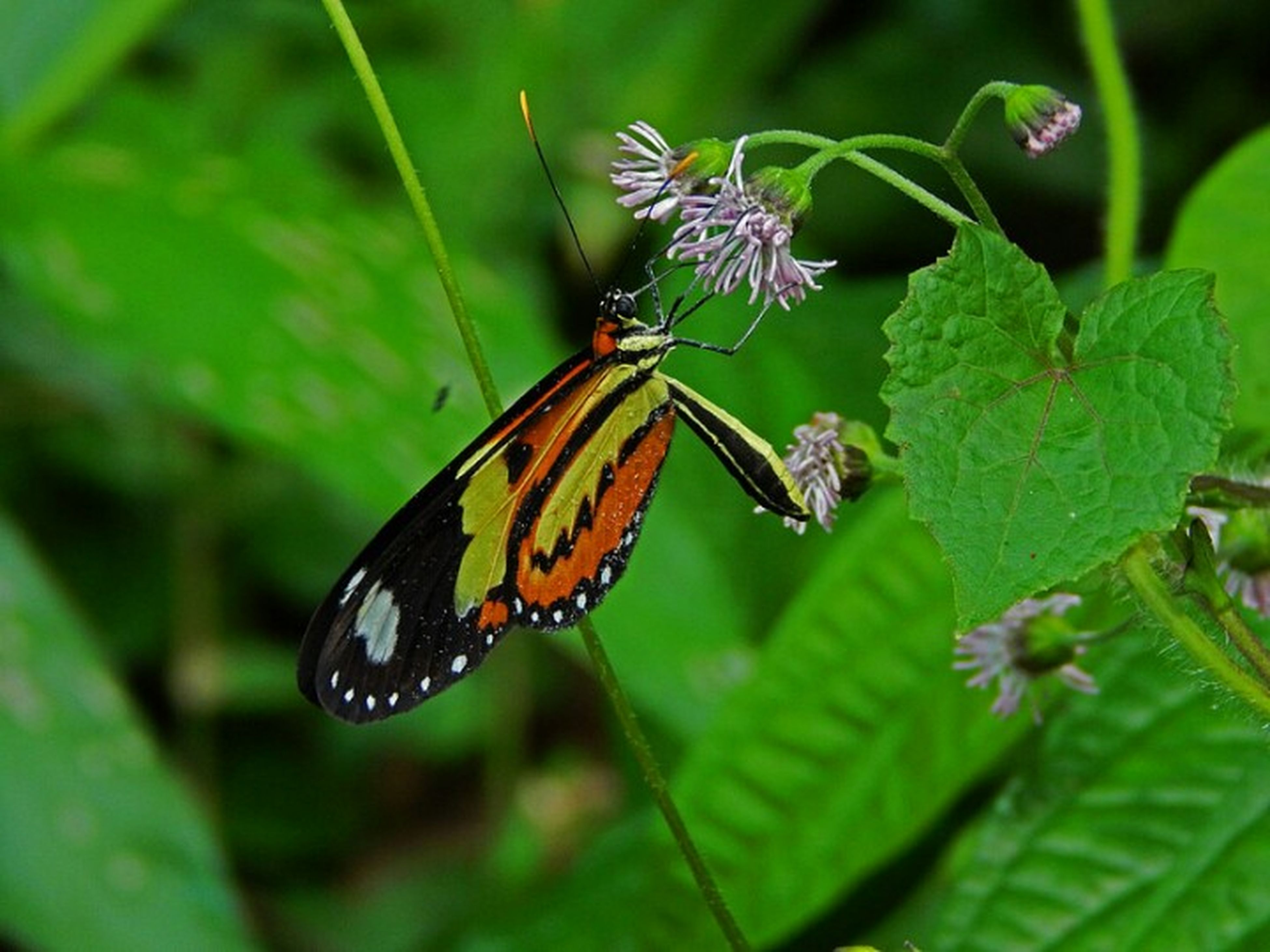 insect, animals in the wild, animal themes, one animal, butterfly - insect, wildlife, butterfly, flower, focus on foreground, leaf, close-up, fragility, plant, animal markings, beauty in nature, growth, animal wing, nature, green color, freshness