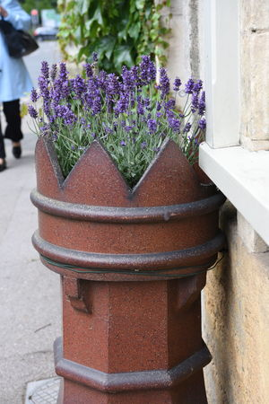 Architecture Beauty In Nature Chimney Pots Close-up Cotswolds Day Flower Fragility Freshness Growth Lavender Nature No People Outdoors Plant Potted Plant