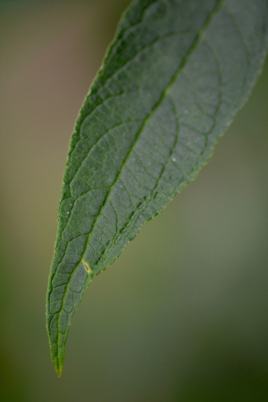leaf, green color, close-up, growth, nature, day, focus on foreground, no people, outdoors, plant, fragility, freshness, beauty in nature