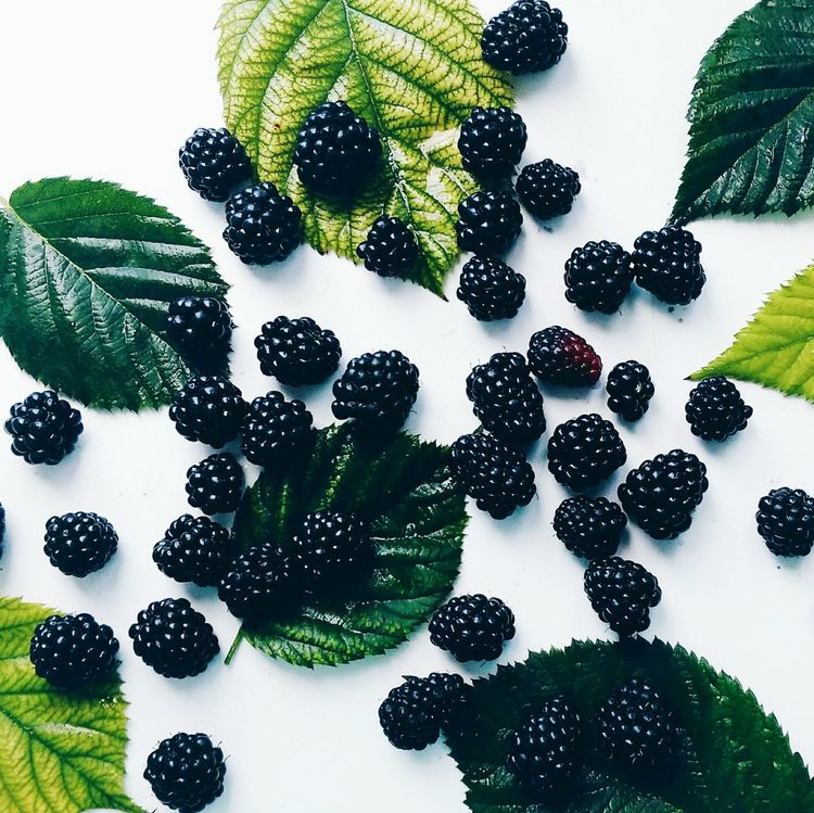 ежевика Blackberry Summer лето