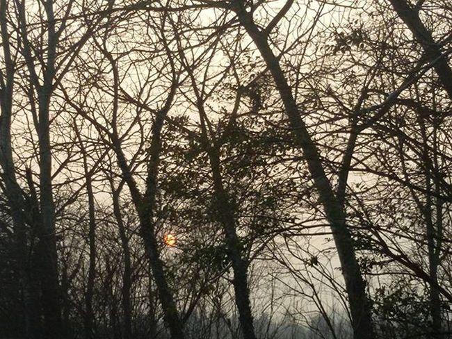 Sole Sun Sunset Tramonto Alberi Foglie Leaves Colors Colori Tree Soleil Coucherdesoleil Arbres Laisse Branches