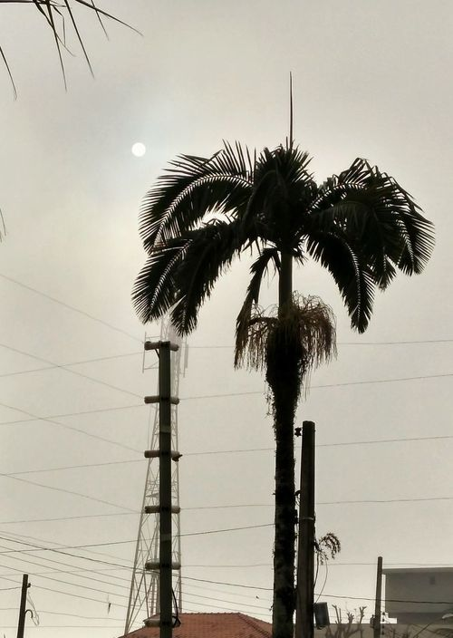 Palm tree and fog Palm Tree Tree Silhouette Low Angle View No People Tree Trunk Sky Outdoors Day Nature Beauty In Nature Nature Plant Building And Nature Building Exterior Tree Shadow Trees And Sky Fog