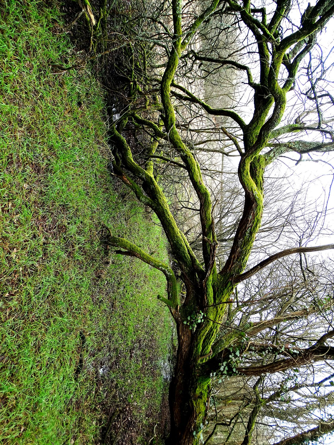 Nature No People Tree Growth Green Color Beauty In Nature Outdoors Day Wind Damage Fallen Tree Over A Stream Abstract Tranquility Morbihan France Ploerdut Marsh Green Color Winter Branch Fallen Trees Over Water Dark Forest Fallen Tree