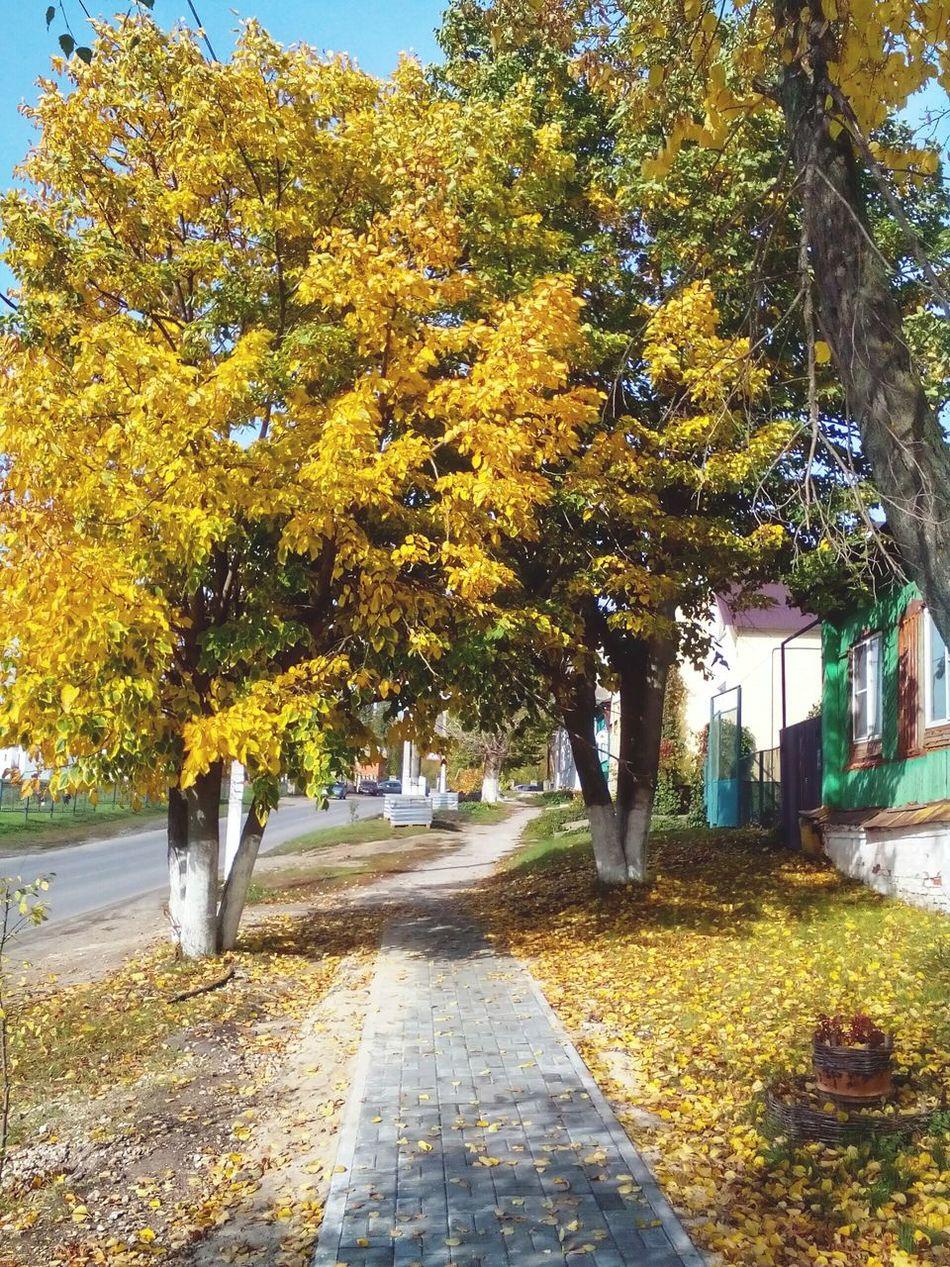 осень мойгород Natural Beauty Autumn Tree Moments Of My Life