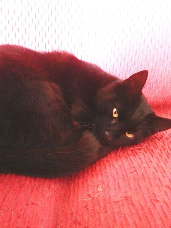 Cat♡ BLackCat Hello World Relaxing Yelloweyes