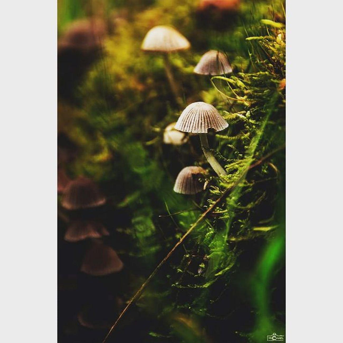 the mushrooms. Mushrooms CripixtMovement Calvinize Jaworskyj Michaellangerfotografie Makrophotography Makros Earthshoot Fotografie Photography Photographyislife