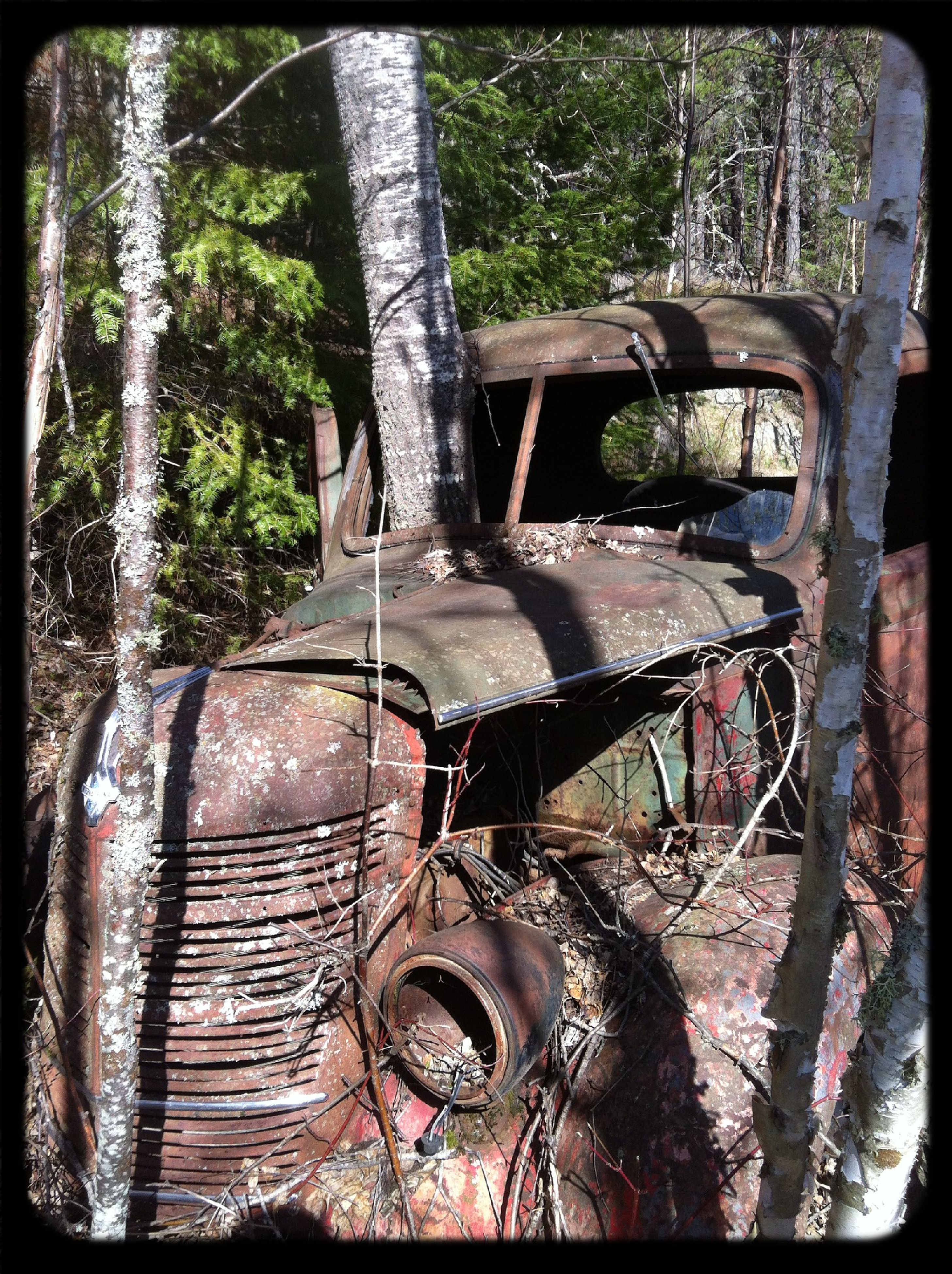 transfer print, transportation, mode of transport, auto post production filter, land vehicle, tree, abandoned, old, obsolete, damaged, deterioration, run-down, stationary, wheel, day, sunlight, rusty, bicycle, car, outdoors