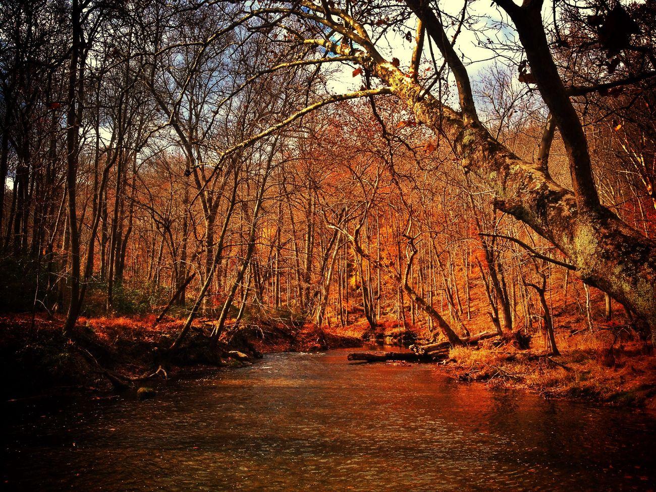 Last of fall...