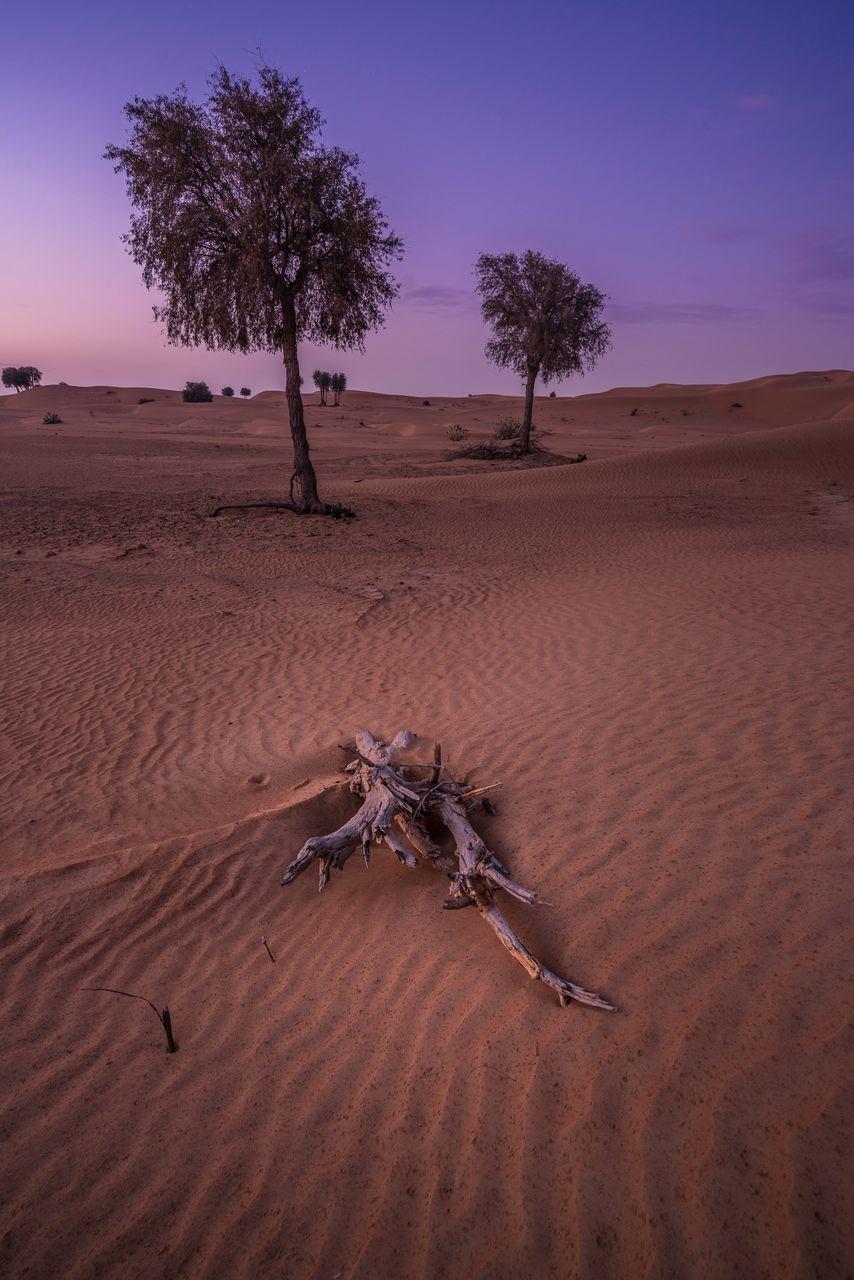 Dead Tree On Desert Against Sky