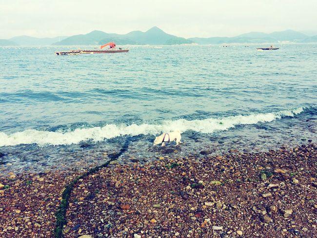 EyeEm Best Shots EyeEm Best Shots - Nature Dog❤ Sea And Sky Seaside Seascape Swimming Dog Swimming Hachiko