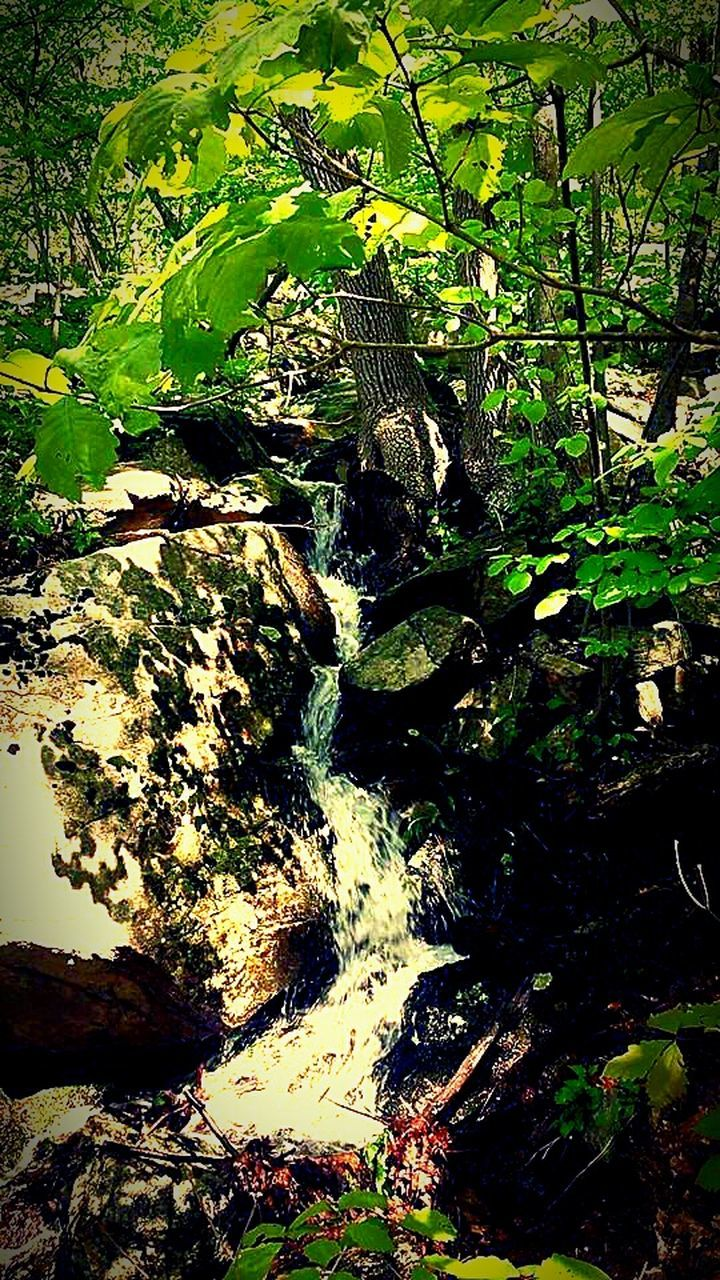 nature, outdoors, forest, beauty in nature, tranquility, growth, day, no people, water, moss, tree, waterfall