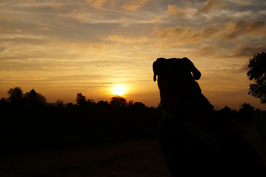 Hunde Dog Love Dog Walking Dogwalk Dog Days Dogs SweetLe Sunset Silhouettes Nature Photography Color Photography Sky And Clouds