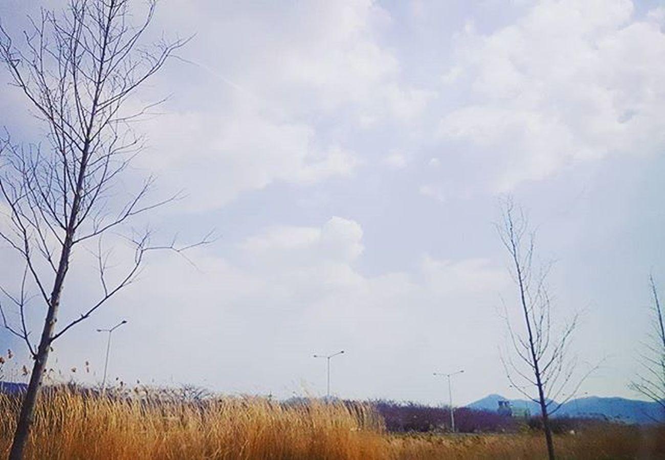 백발의 택시기사님과 시속130킬로로 드라이빙하기 1분전 삼락공원 .. .. ... .... Photography Photographer 부산 Busan Spring Sky 일상 데일리 감성 감성사진 사진 여행 일상공유 Sotong 미러리스카메라 Follow Followme Photo Travel Daily Southkorea