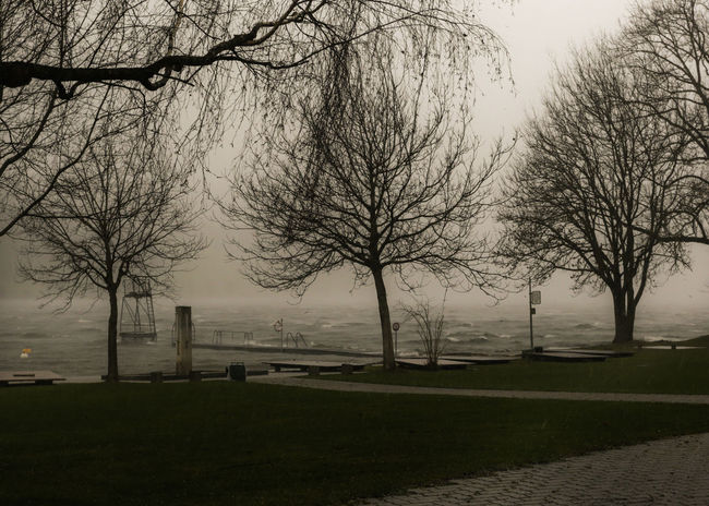 Trees And Water Storming Foaming Waves Foaming Water Trees_collection Water And Storm Forces Of Nature Beatyful Nature No People Outside Waves And Clouds Water And Waves Burglind Storm Over Lake Of Baldegg Lake Of Baldegg Switzerland Stormy Stormy Lake
