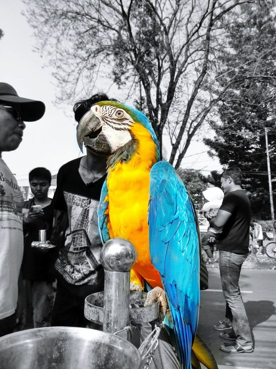 Love this animal! --- Bird Bird Photography Birdphotooftheday Amateurphotography Bnw_friday_eyeemchallenge Love ♥ Colorful Colour Of Life Shine Bright Like A Diamond  Bandung Bandungjuara Bandungbanget Explorebandung Westjavaindonesia INDONESIA Sculpture Outdoors