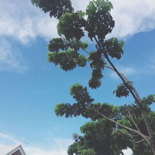 Happy saturday Tree Sky Day Cloud - Sky Outdoors Happy HappySaturday First Eyeem Photo