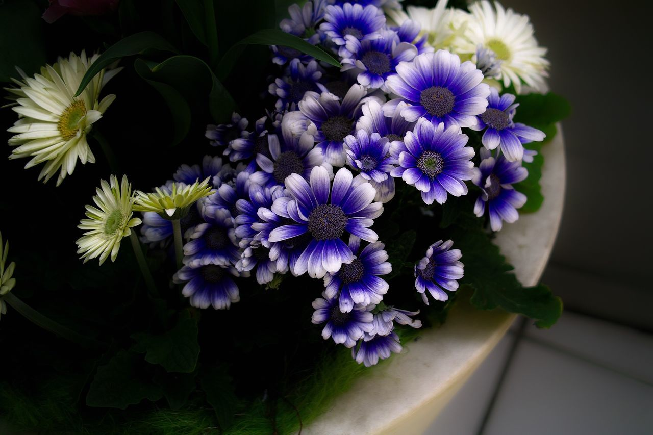 Flower Purple Beauty In Nature Blooming Nature Flower Head Growth Plant
