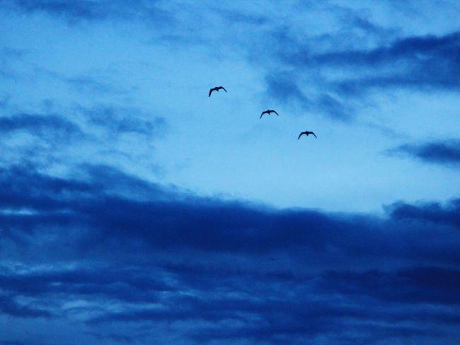 The Returning An Evening On My Terrace Birds In Flight Returning Home Blue Sky
