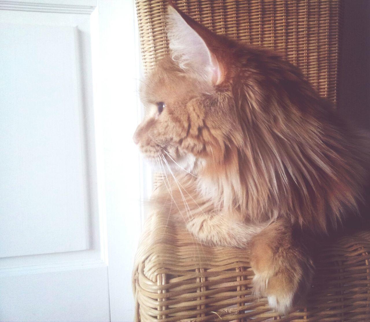 Beautiful stock photos of pets, Adult Animal, Animal, Animal Hair, Animal Themes