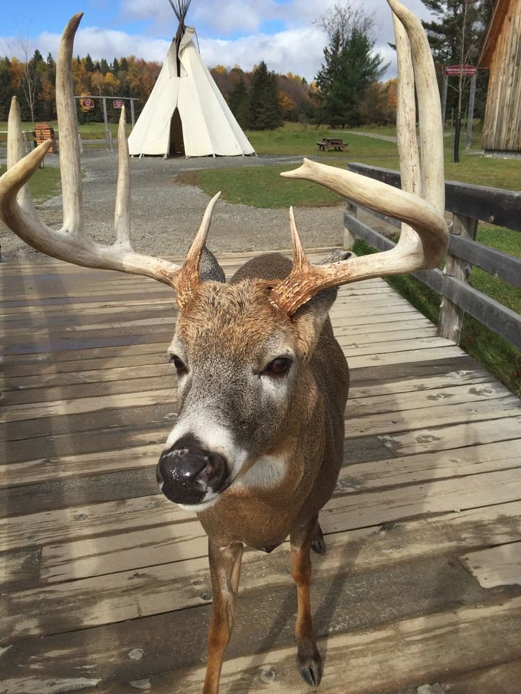 Deer Autumn Animal Wood The Great Outdoors - 2016 EyeEm Awards