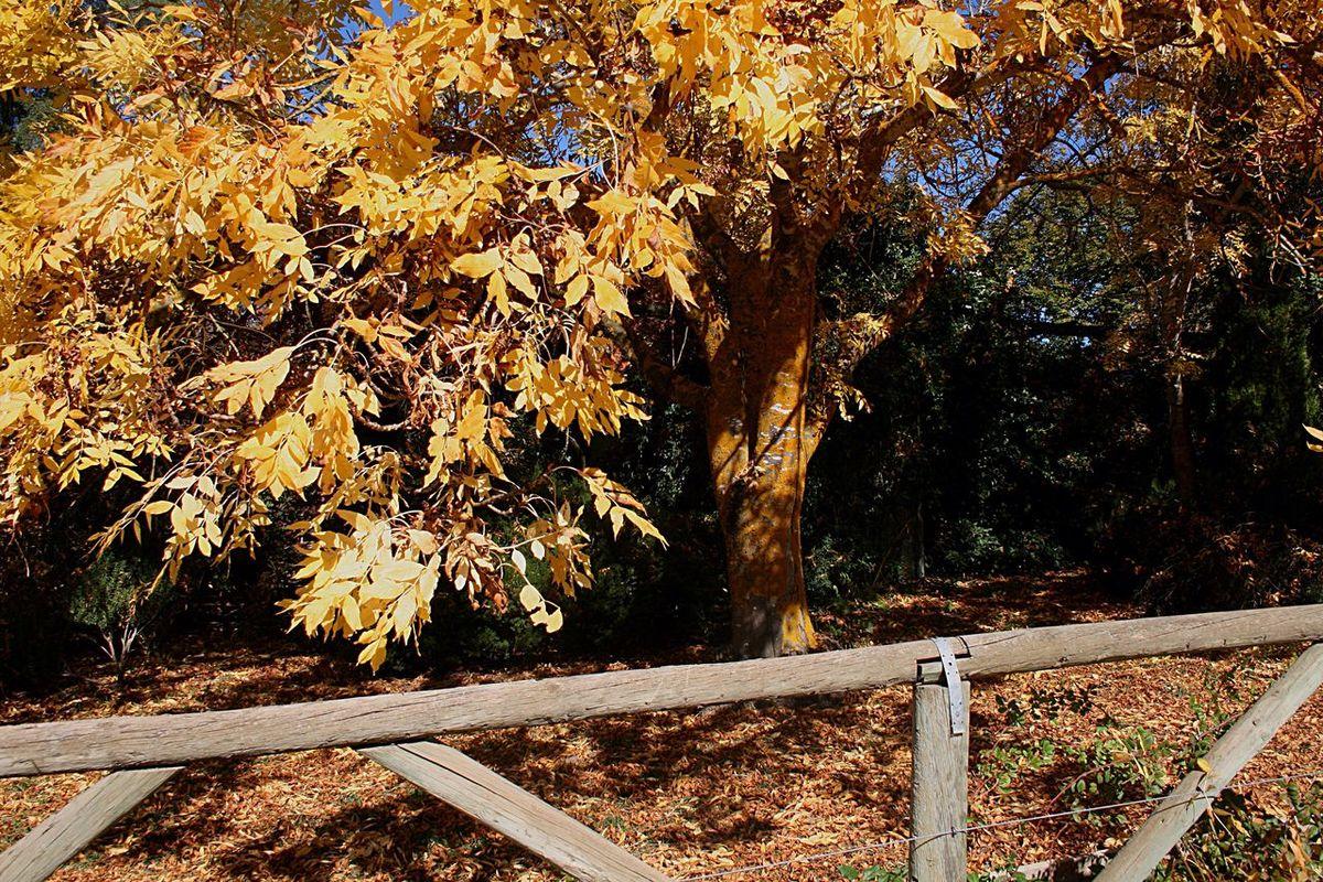Autumn tree Autumn Garden Autumn Colors Autumn Leaves Autumn🍁🍁🍁