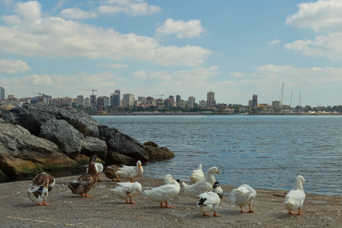 Waterfront Animal Themes Beauty In Nature Bird Blue City Cityscape Cloud Cloud - Sky Cloudy Day Ducks Feathers Istanbul, Turkey, Bosphorus, Sea, Europe, European, Asia, Asian, Country, Golden Horn, Bosphorus, Bosphorous Straights, Marmara Sea Nature No People Outdoors Rippled Rocks And Water Sky Sky And Clouds Water